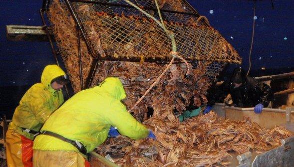 Alaskajobfinder leader in alaska fishing industry jobs for Fishing jobs in alaska